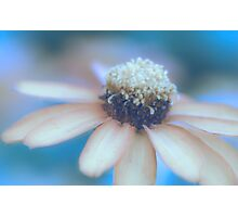 Flower Dream Photographic Print