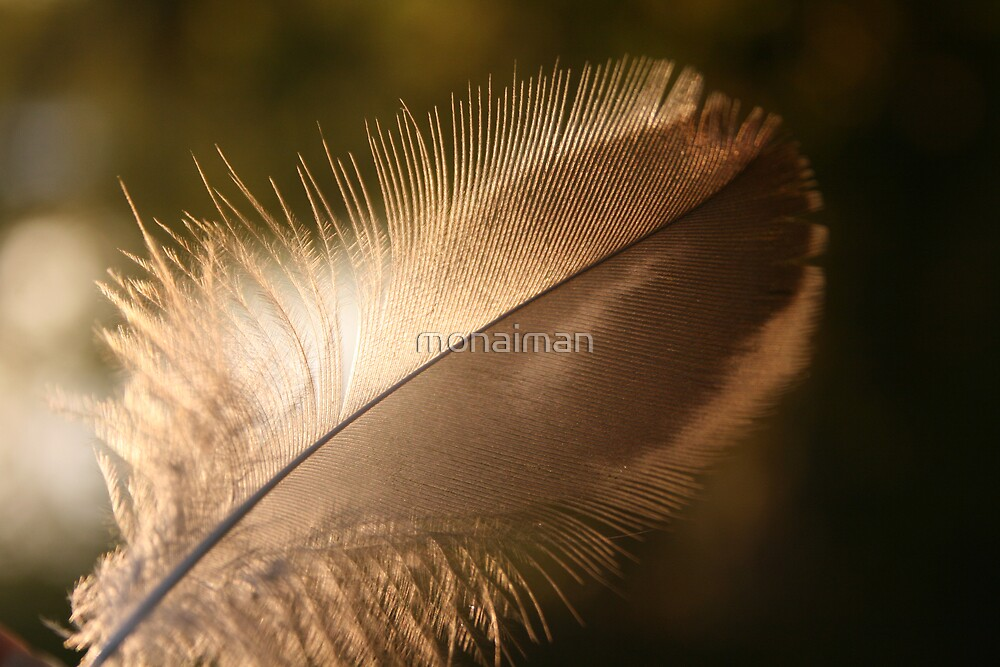 journey of a feather 2 by monaiman