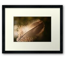 journey of a feather 2 Framed Print