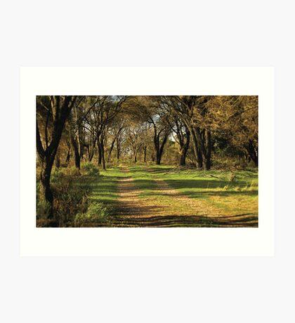 she-oak track Art Print