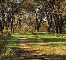 she-oak track by bally58
