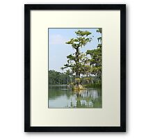Cypress Tree Framed Print