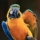 Dancing Macaw by Ann  Van Breemen