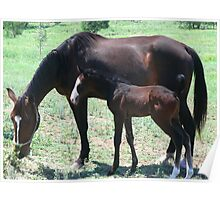 Mum and foal Poster