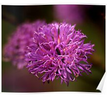 Ironweed Blossom Poster