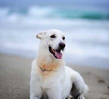 Jonah :) by artsphotoshop