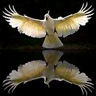Sulphur crested cockatoo reflection by Sheila  Smart