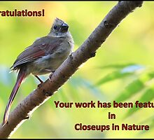 Juvenile Female Cardinal Featured in Closeups in Nature Banner by hummingbirds