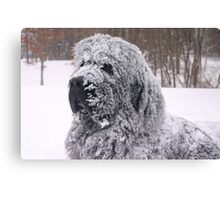 The Newfie Snow Dog Canvas Print