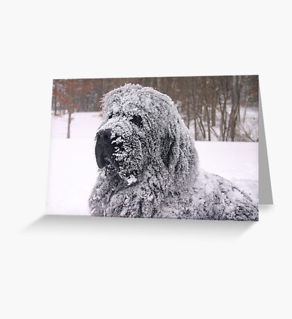 The Newfie Snow Dog Greeting Card