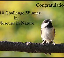Chickadee Top 10 Banner Closeups in Nature by hummingbirds