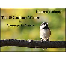 Chickadee Top 10 Banner Closeups in Nature Photographic Print