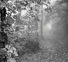 Fog Path - Drei Eichen by Jon Julian