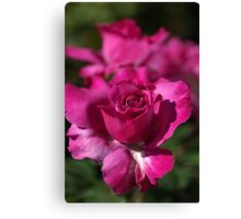 Pink Rose Of Summer Canvas Print