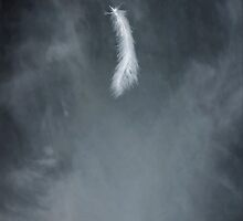 feather by Joana Kruse
