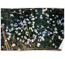 Spring flowers on the north york moors Poster