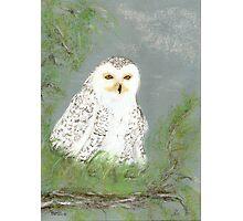 snow owl Photographic Print