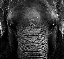 elephants by Stuart Elliott