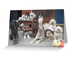 Hold It!   Photo Day at Doggy School. Greeting Card