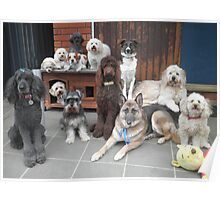 Hold It!   Photo Day at Doggy School. Poster