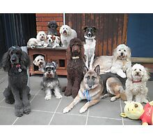 Hold It!   Photo Day at Doggy School. Photographic Print