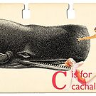 C is for Cachalot by Margaret Orr