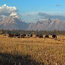 Teton Grazin' by Dennis Jones - CameraView