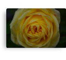 Dewey Rose Canvas Print