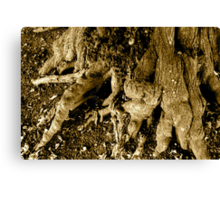 Rooted 6 Canvas Print