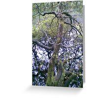 Gougane Barra Sept 2008 No. 02 Greeting Card