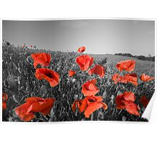 Colour pop the poppies Poster