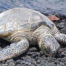 Sea Turtle by Shaina Lunde