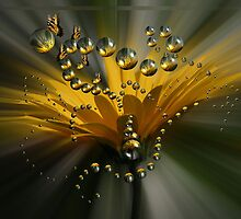 Bursting Bubbles by Christina Sauber