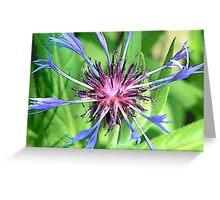 Multicoloured Flower Greeting Card