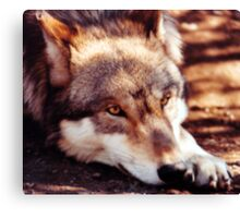 Howling for the Pack Canvas Print