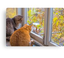 cats watch a squirrel Canvas Print