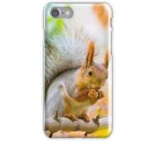 Squirrel eating nut on the branch iPhone Case/Skin