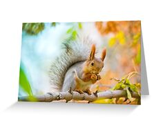 Squirrel eating nut on the branch Greeting Card