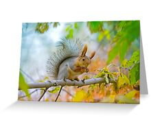 Red euroasian squirrel washes on the maple branch Greeting Card