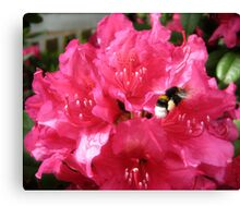 Flying bee Canvas Print