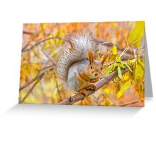 Red euroasian squirrel on the maple branch Greeting Card