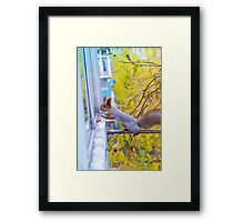the squirrel looks for to eat on a balcony Framed Print