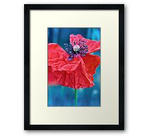 a Red poppy flower with blue background Framed Print