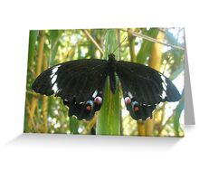 Bamboo Butterfly Greeting Card