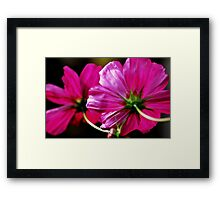 Seeing problems Framed Print