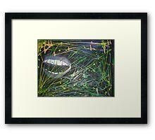 wild colors  Framed Print