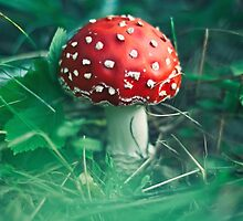 red stipe mushroom on the forest by Oksana Ariskina