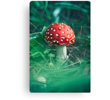 red stipe mushroom on the forest Canvas Print