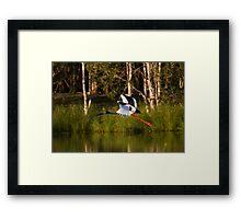 Jabiru Bow Framed Print