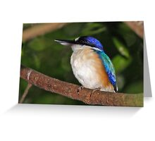 Forest Kingfisher  Greeting Card